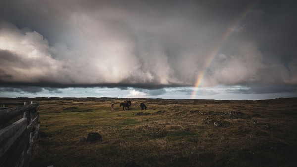 Rainbow and horses in Iceland