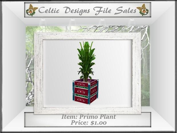 CD Primo Plant