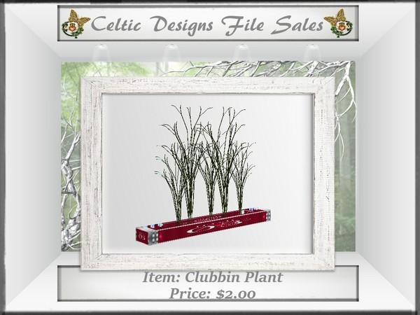 CD Clubbin Plant