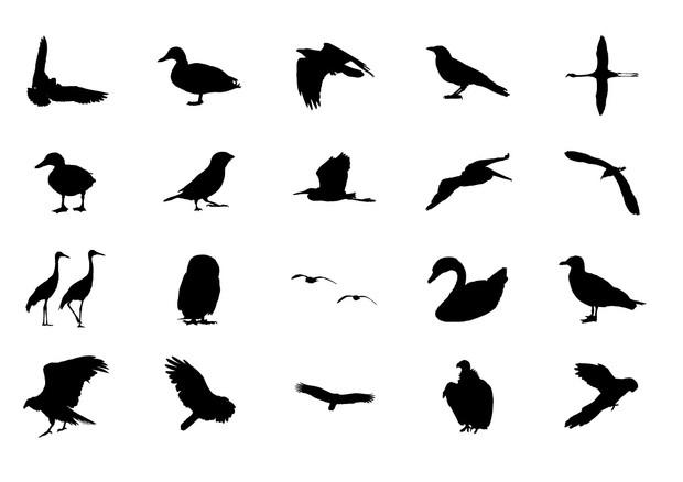Birds Volume 2