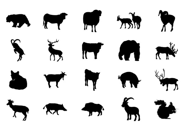 Animals Volume 2
