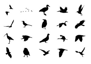 Birds Volume 1