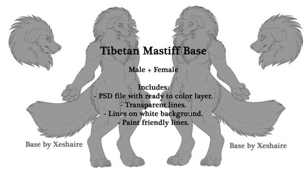Tibetan Mastiff Base - Male + Female