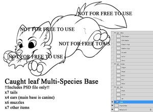 Multi-Species Leaf Base