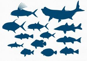Inshore Gamefish Vector Pack