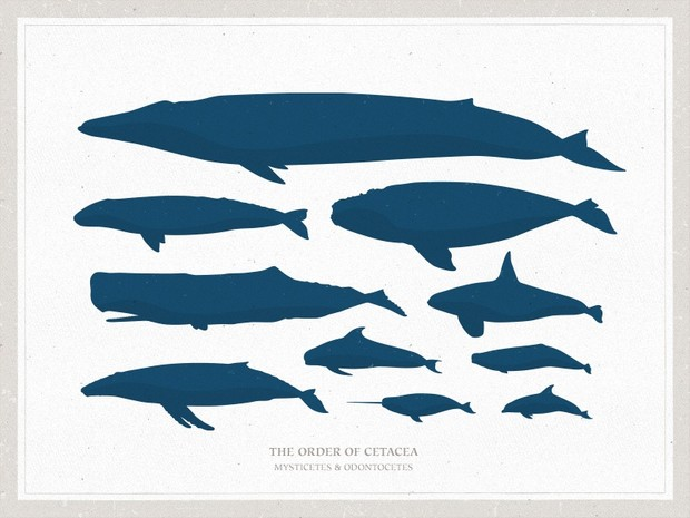 Basic Whales Vector Pack