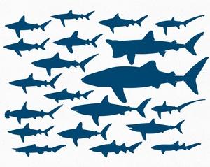 Sharks Vector Pack