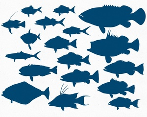 Deep Sea Reef Fish Vector Pack