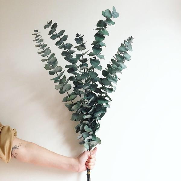 Bouquet d'eucalyptus true blue préservé | NATUREL