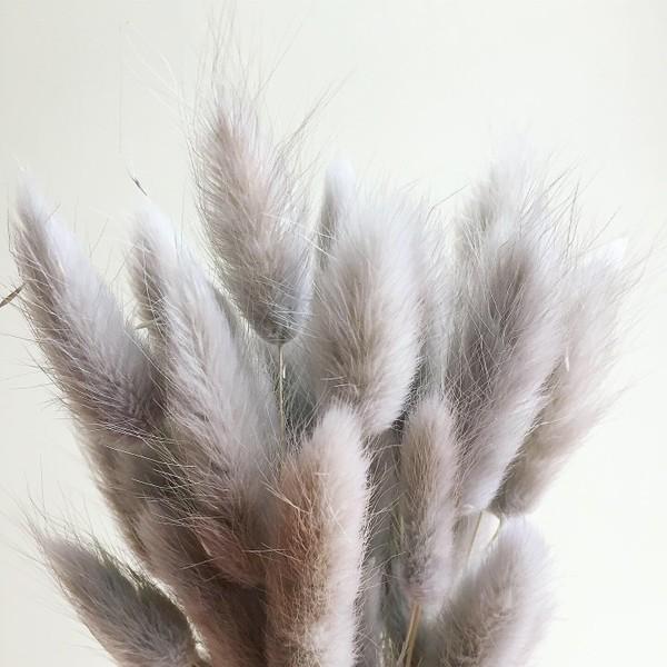 Bouquet de LANGURUS préservés | GRIS