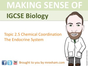 IGCSE Biology - The Endocrine System Presentation