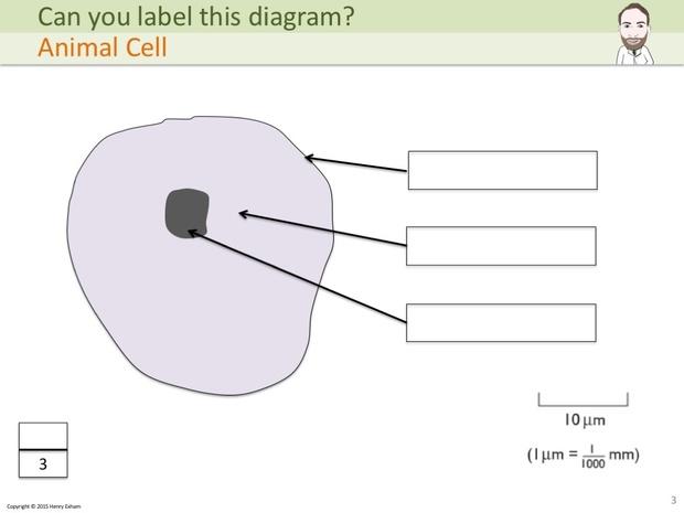IGCSE Biology - Label The Diagram Revision