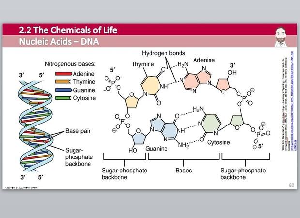Cambridge Pre-U Biology - 2.2 Chemicals of Life Presentation