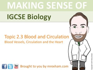 IGCSE Biology - Blood Vessels, Circulation and the Heart Presentation