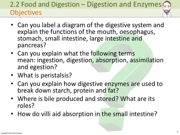 IGCSE Biology - Digestion and Enzymes Presentation