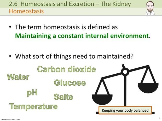 IGCSE Biology - The Kidney Presentation