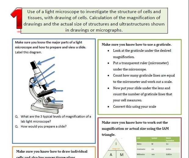 IB Biology 7 Key Practicals Revision Exercise