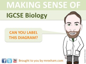 IGCSE Biology - Label The Diagram Revision