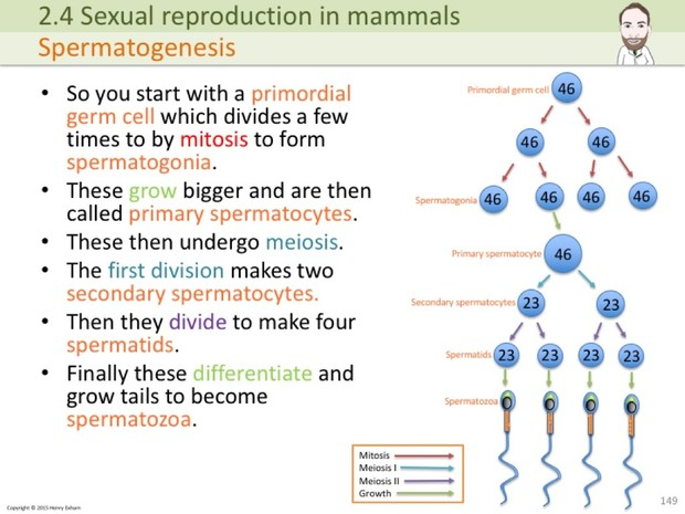 A Level Biology - Cells, Viruses and Reproduction of Living Things  Presentation
