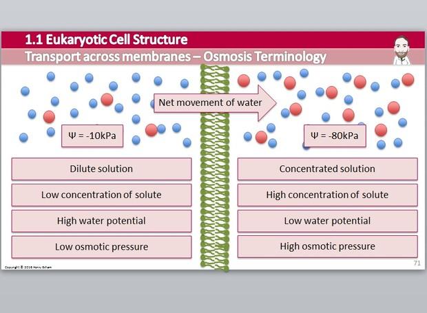 Cambridge Pre-U Biology - 1.1 Eukaryotic Cell Structure Presentation
