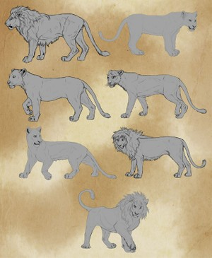 7 Lion Lineart Package