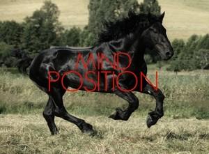Stallion Stamina (Males)