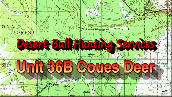 Unit 36B Coues Whitetail