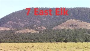 Unit 7 East Late Bull Elk