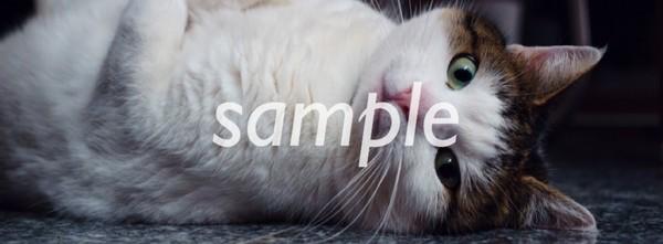Facebook Cover Art (cat)