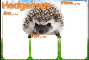 PDF HEDGEHOGS ARE CAN HAVE