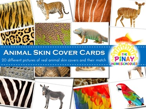 Animal Skin Cover Cards