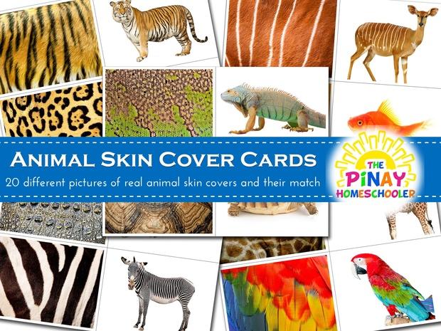 Animal Skin Cover Cards