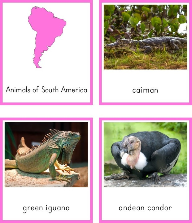 Montessori Animals of South America 3 Part Cards and Fact Cards
