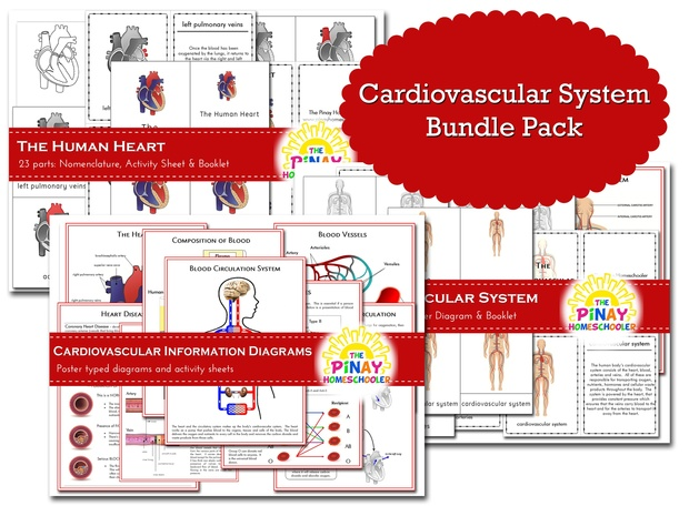 Cardiovascular System BUNDLE PACK