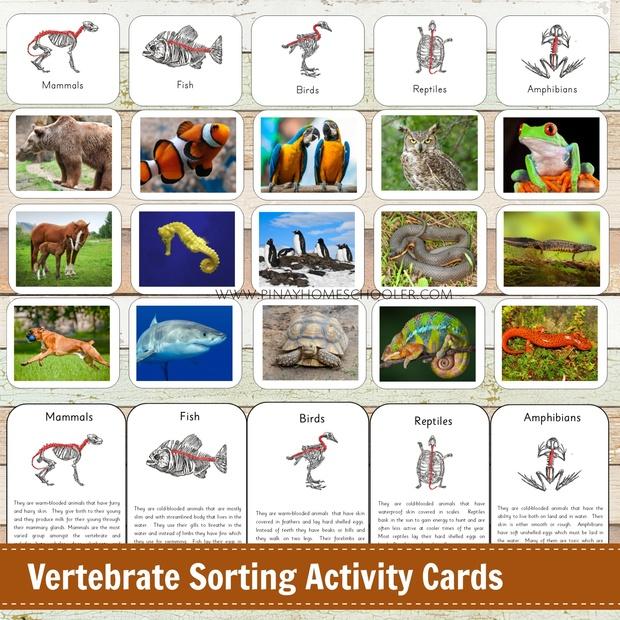 Vertebrate Sorting Card Activities