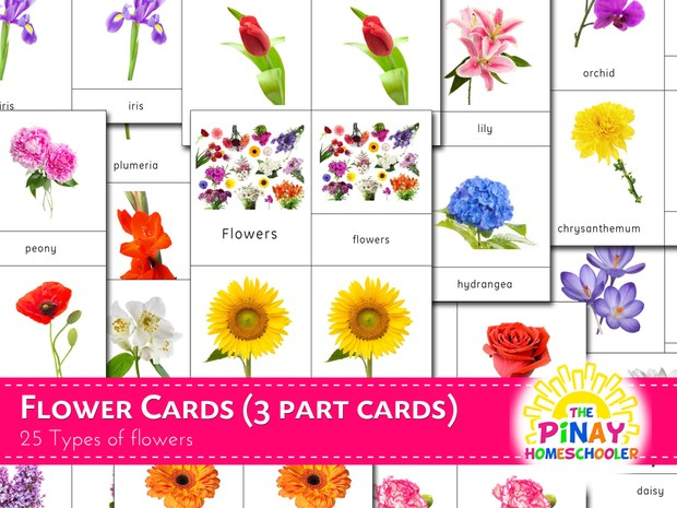 Flower Cards (3 Part Cards)