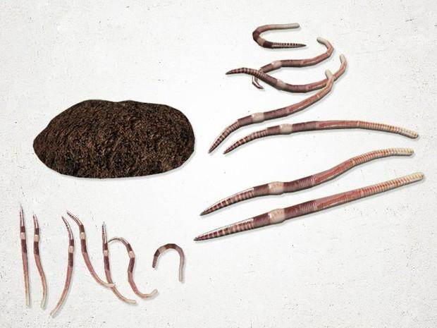 Earthworm - 3D Model