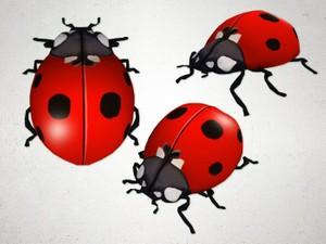 Ladybug - 3D Model