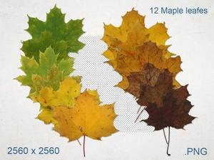 12 Maple leaf Textures