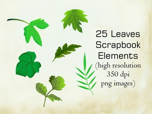 Leaves Scrapbook Elements  (25 png images)