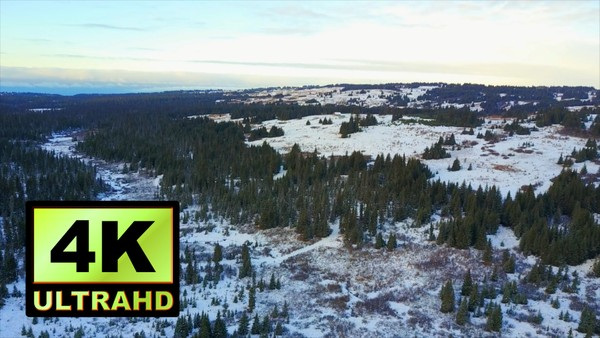 01590_aerial drone footage a beautiful snowed pine forest in Alaska_4K UltraHD Version