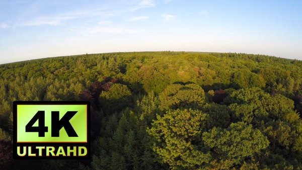 01260_Netherlands drone flying above beautiful forest _4K UltraHD Version