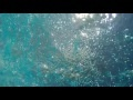 00250_GoPro Hero 4 footage underwater down-up view seamless loop