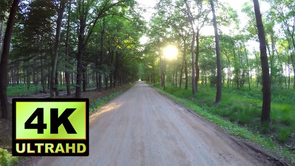 01133_Netherlands drone passing through beautiful forest road_4K UltraHD Version