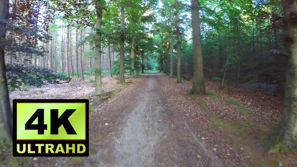01166_Netherlands drone passing through beautiful forest road_4K UltraHD Version