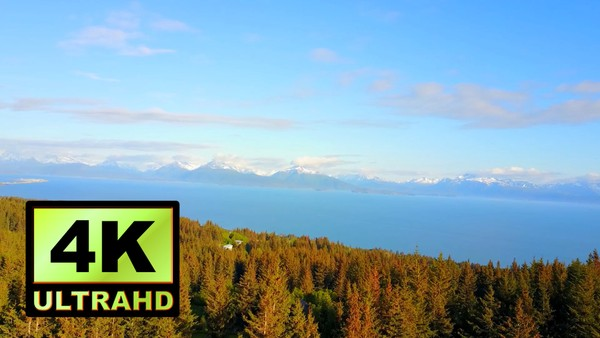 01264_Alaska drone passing above a beautiful pine forest _4K UltraHD Version