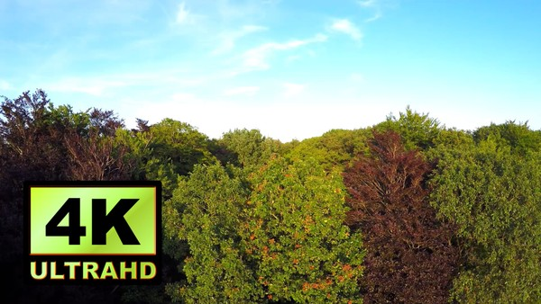 01190_Netherlands drone flying from the ground up revealing a large forest_4K UltraHD Version