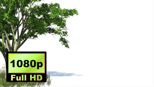 00019_3D animated tree and grass with wind effect