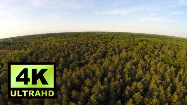 01266_Netherlands drone flying above beautiful forest _4K UltraHD Version