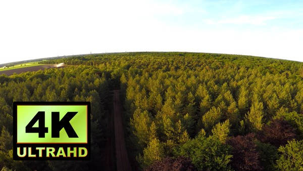 01267_Netherlands drone flying above beautiful forest _4K UltraHD Version